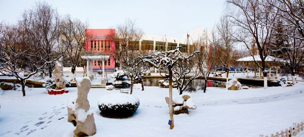 校园雪景-枣庄学院